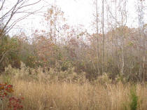 CL652, 57 Acres+/-, Call Brian Davidson,Lake Wedowee Real Estate!